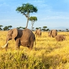 حقایق جالب در مورد کنیا کشور زیبای آفریقایی که از آن ها بی اطلاعید